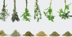 gamme-herboristerie